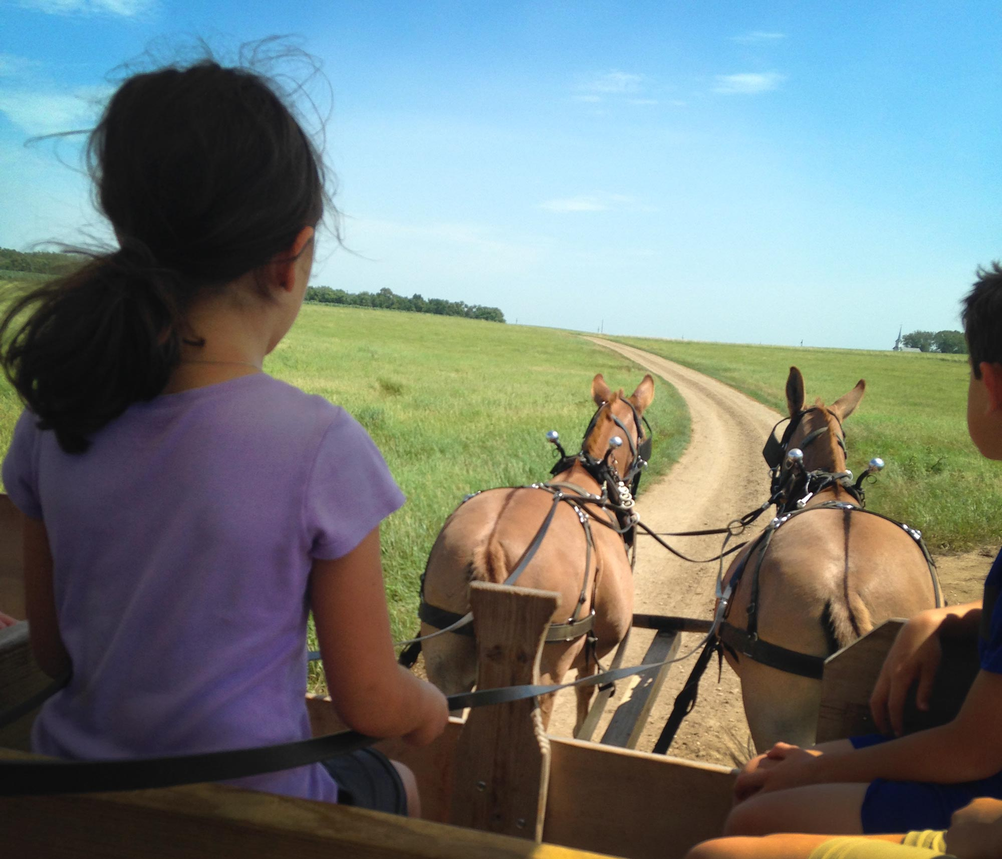 Girl driving a covered wagon at the Laura Ingalls Homestead, De Smet, South Dakota