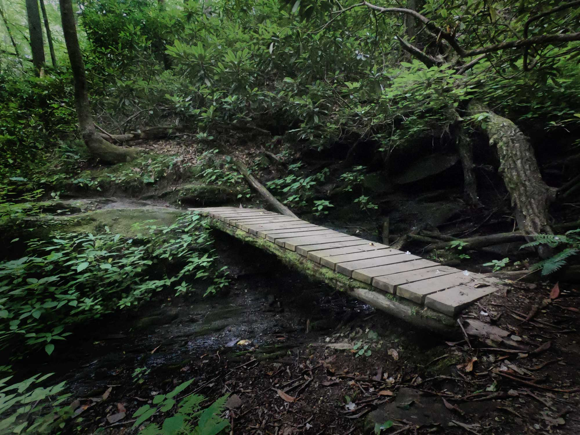 Footbridge on North Slope Loop Trail in Davidson River Campground, North Carolina