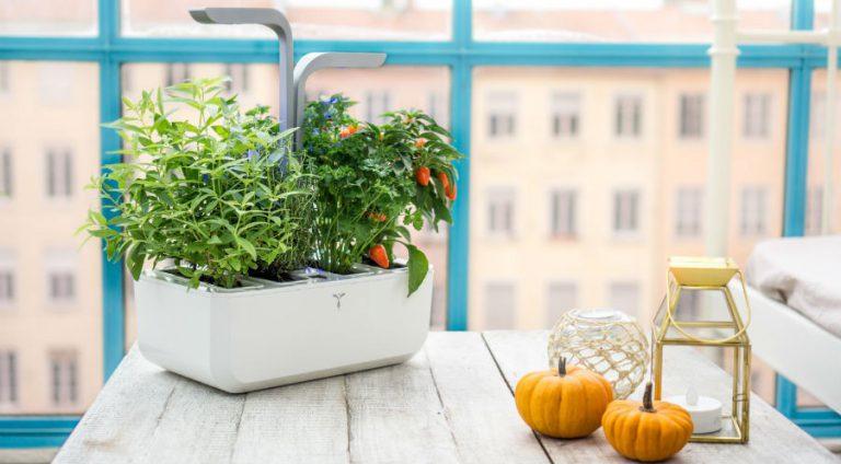 Jardinage connecté : les jeunes pousses à surveiller