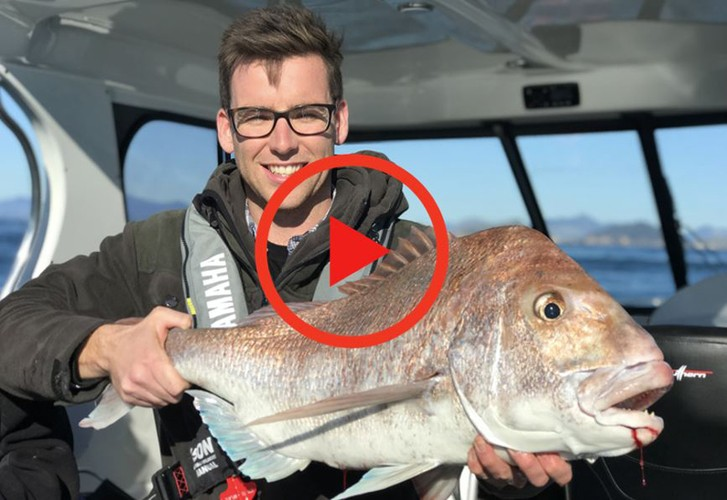 Yamaha School of Fish - Marlborough Sounds snapper
