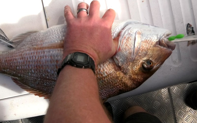 Snapper fishing out west with Yamaha School of Fish