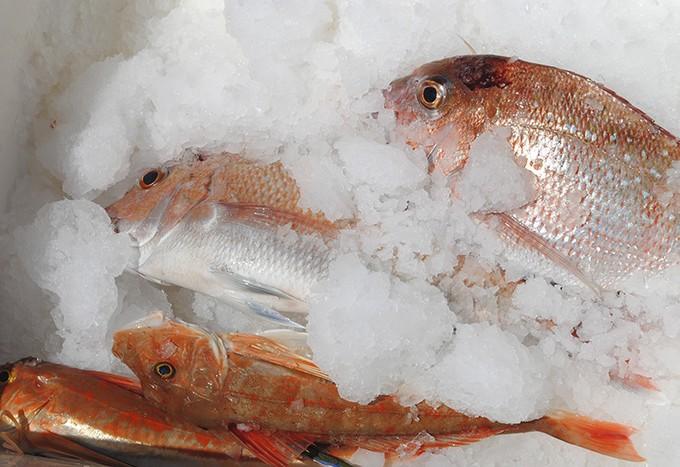 Bin of fish from Rangi Channel
