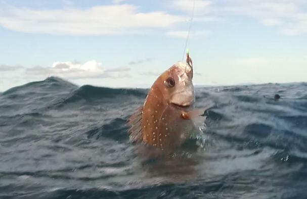 Bait fishing, it still exists
