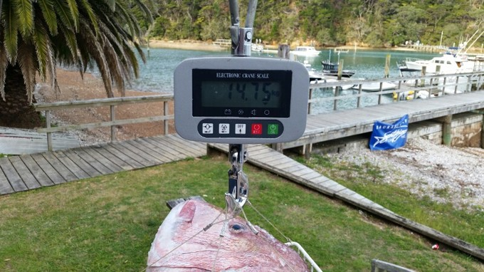 Neil gorringe's snapper weighed in at 14.75kg