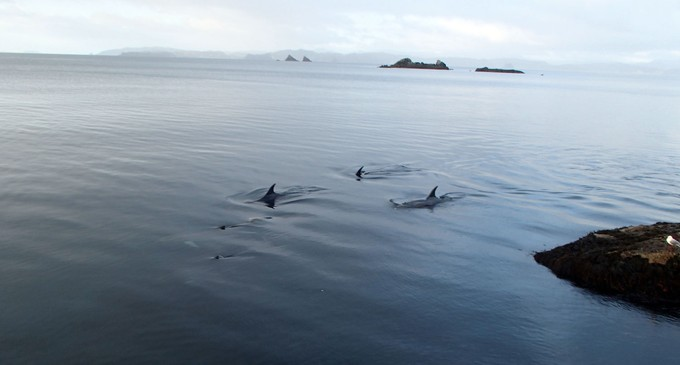 Tom Lusk and dolphins in the Coro