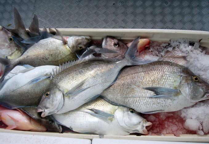 A classic mixed bag of fish