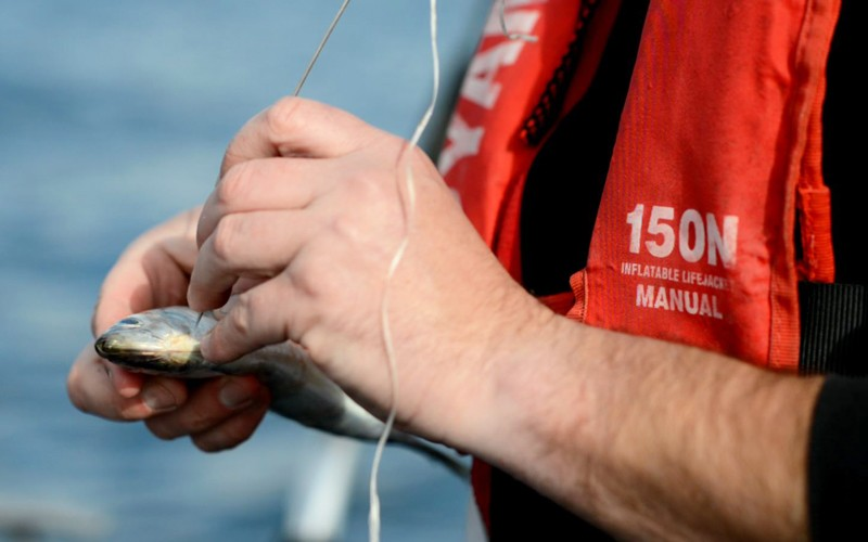 Recreational fishing is a billion dollar industry