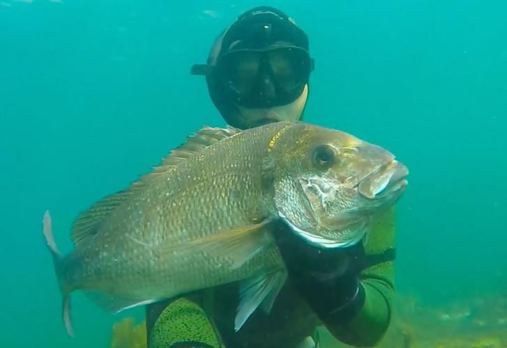 North Island summer spearfishing
