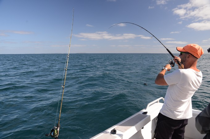 Angler playing skipjack
