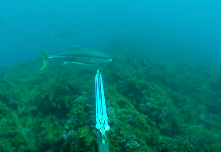 Three Kings summer spearfishing- Big kingfish