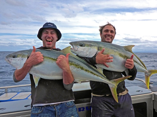 Searching for yellowtail gold in the Coromandel