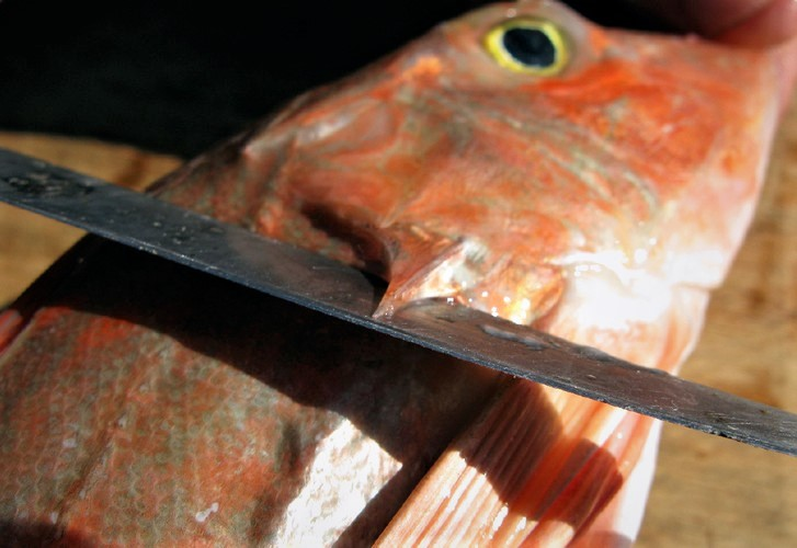 Filleting gurnard – the oft forgotten art