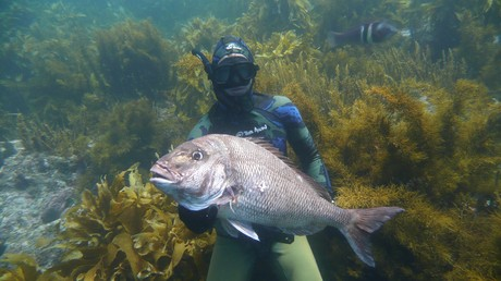 Getting into spearfishing - A beginner's guide