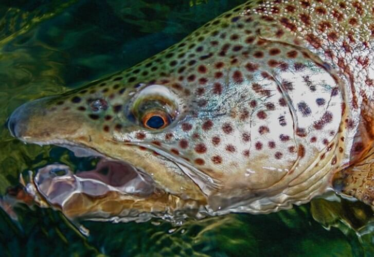 Freshwater: Fishing the seasons