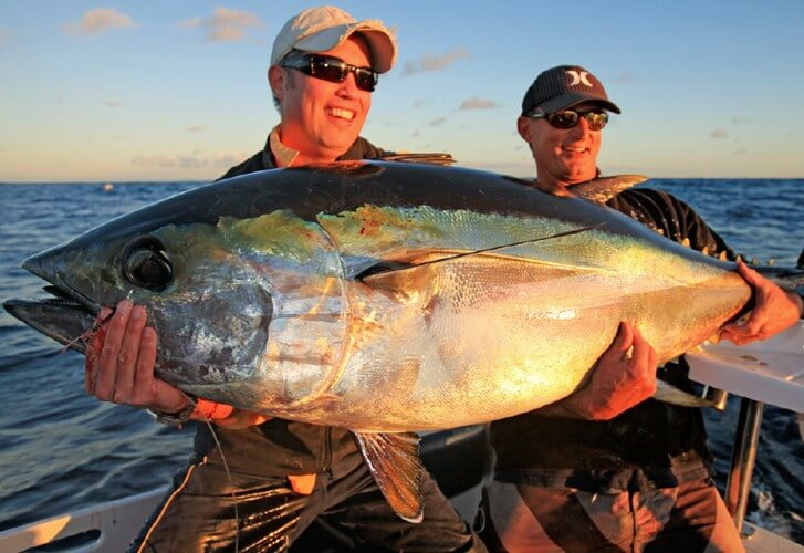 The elusive big eye tuna