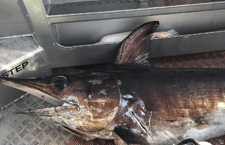 How to rig for daytime swordfishing