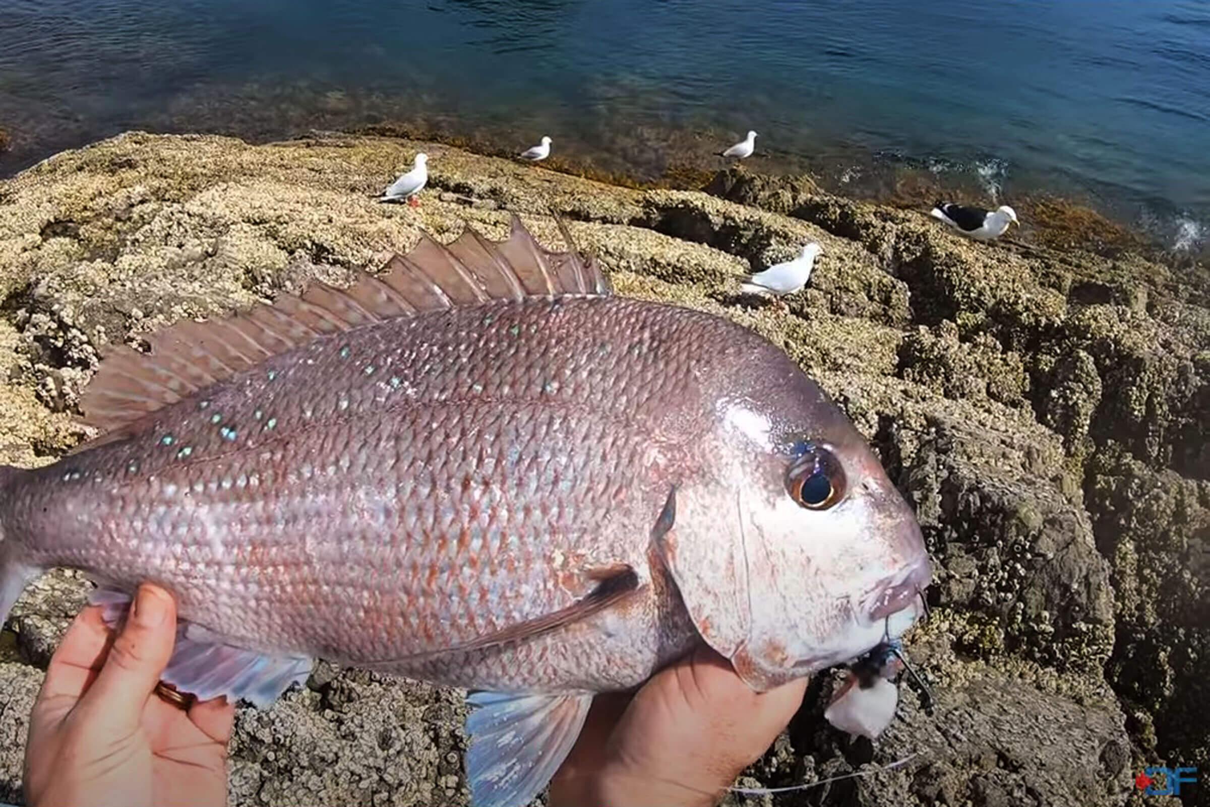 Digital Fish: January