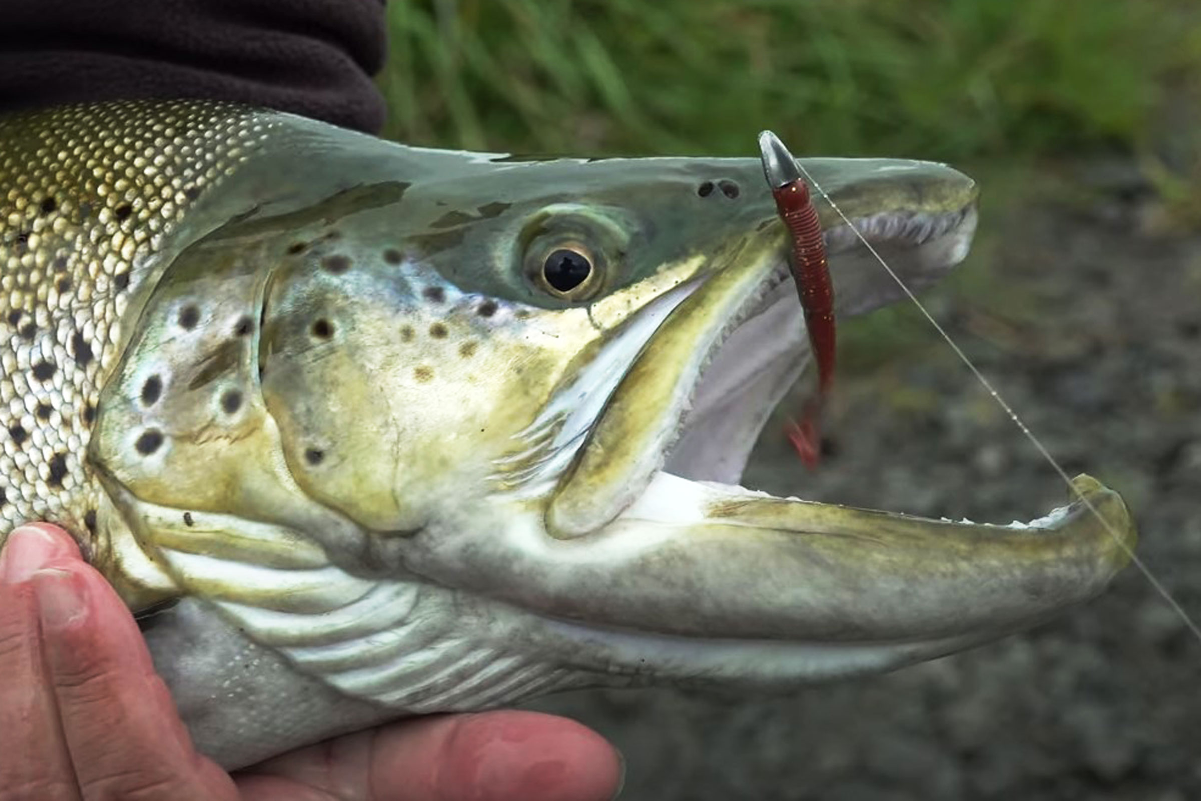 Soft baiting for monster trout in the South Island