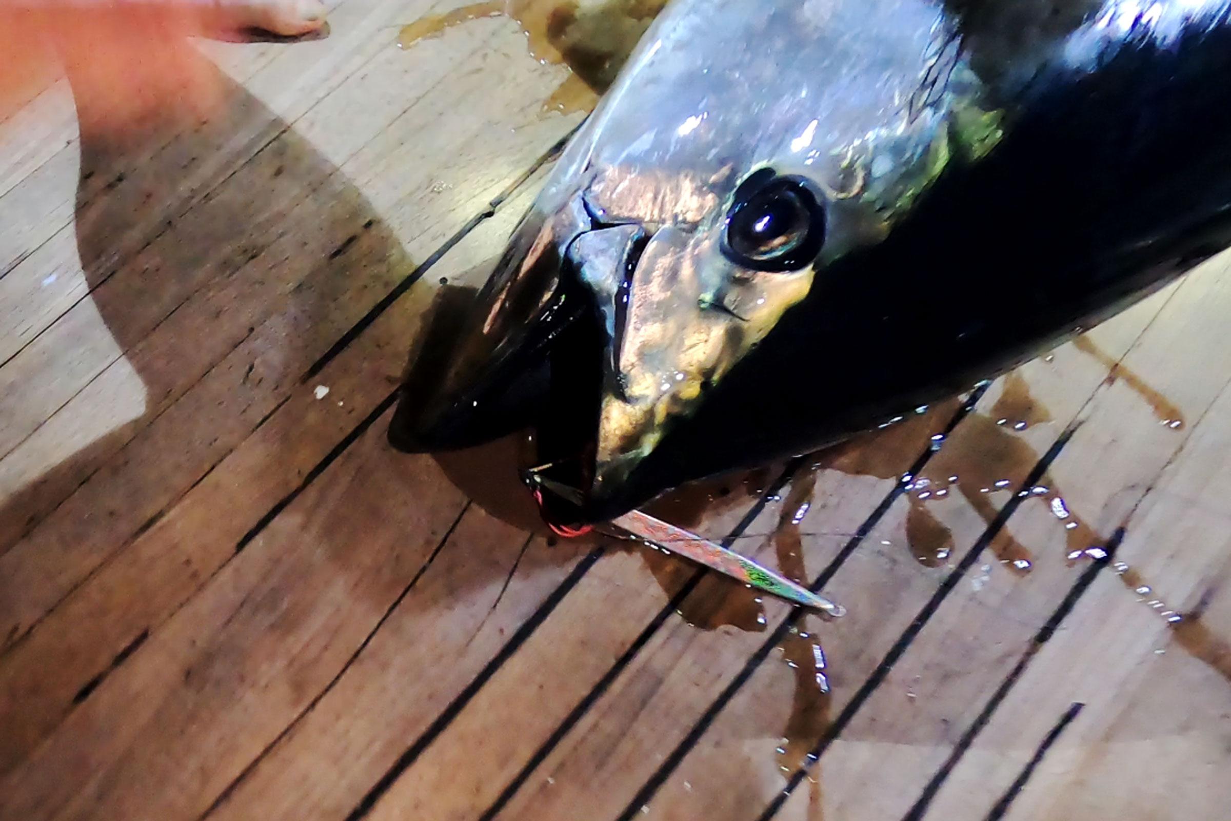 How to: Night jigging for bluefin tuna