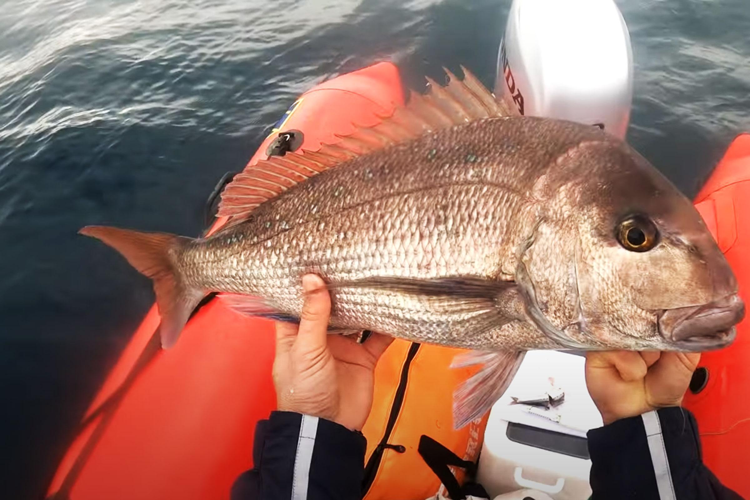 The Digital Fish report