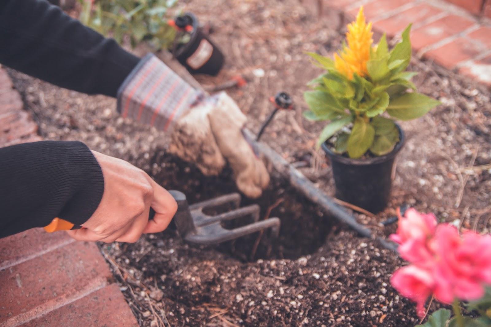 gardener planting in the garden