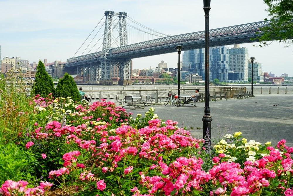 pink flowers near bridge