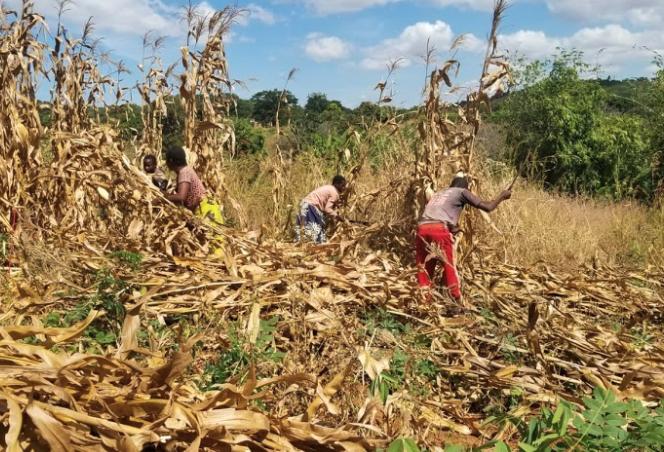 people farming
