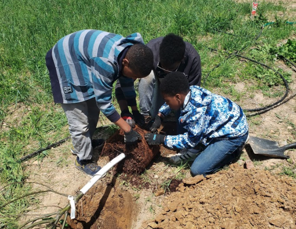 group of kids planting tree