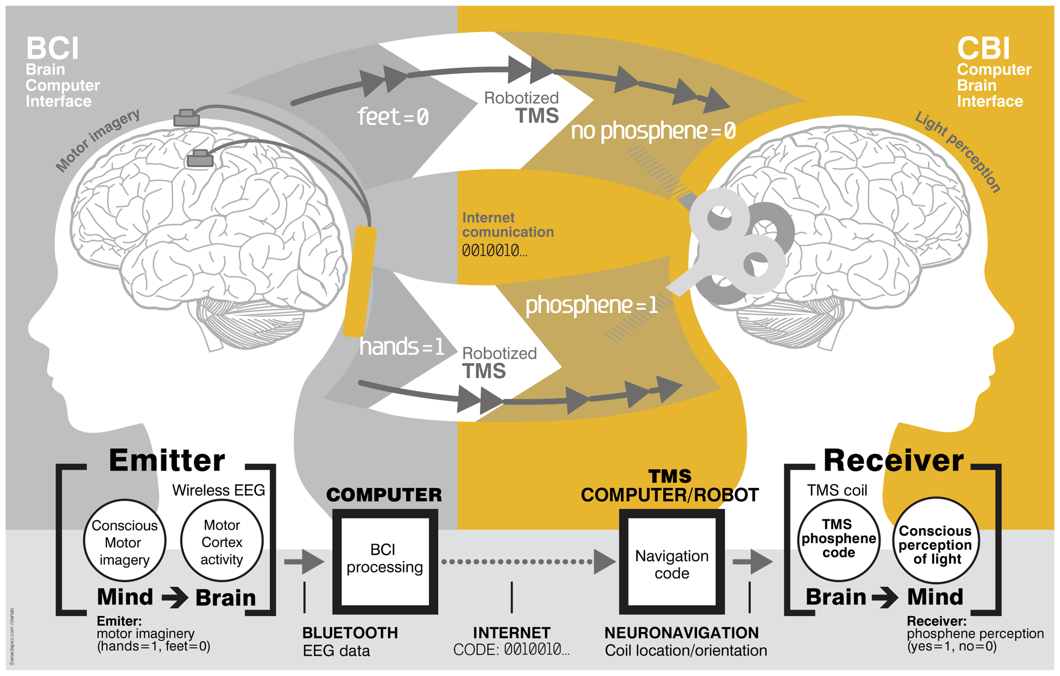 diagram of how telepathy works with EEG & TMS