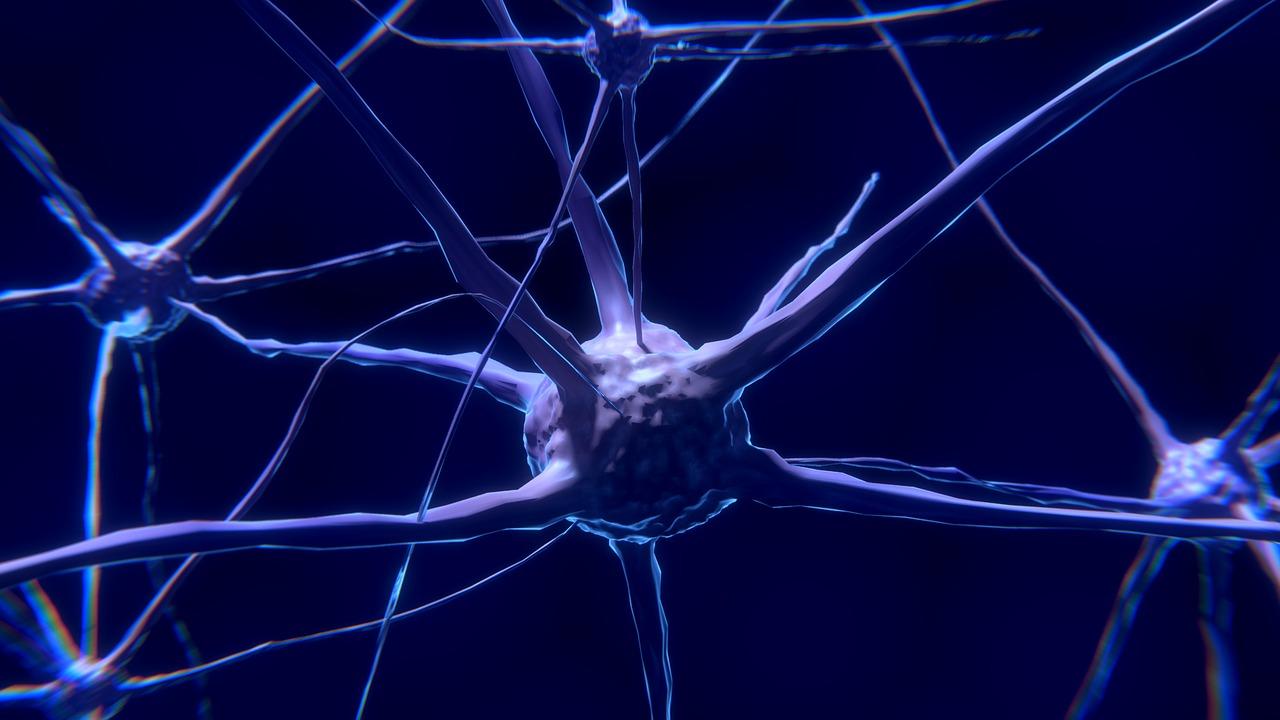 brain neuron cells