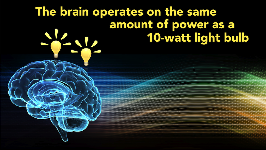 Graphic from Scientific Animation states that the brain operates on the same amount of power as a 10-watt light bulb