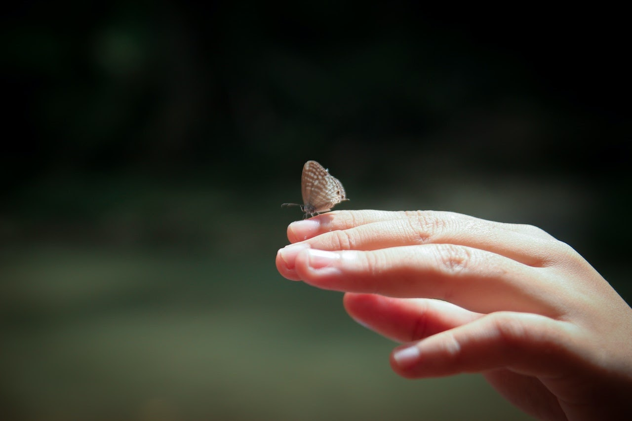 A person's hand holds a small butterfly, which sits on top of a finger.