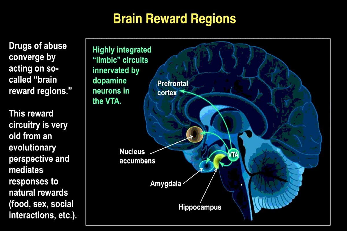 chart of brain reward regions