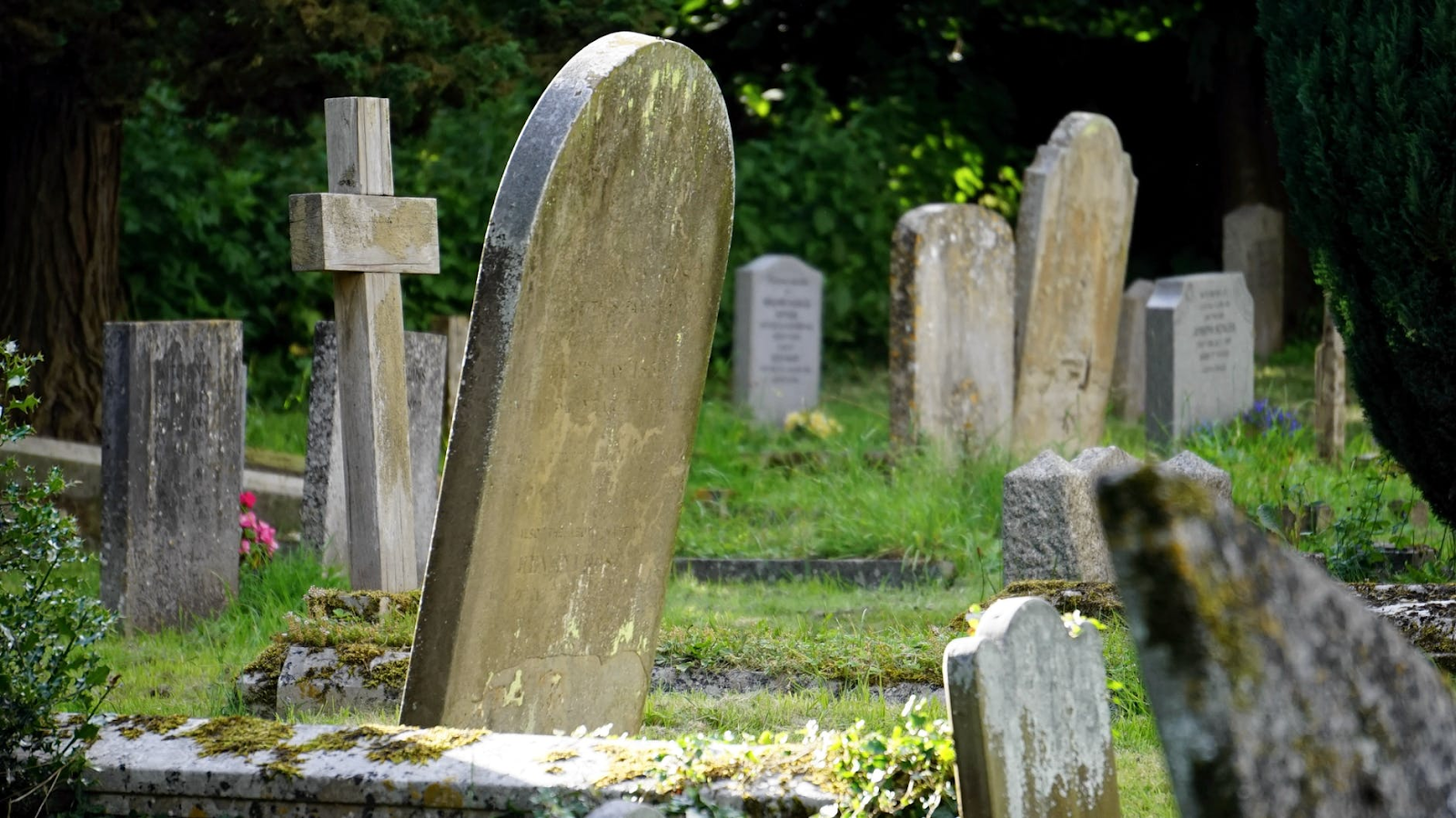 An image of a graveyard with many headstones visible. There is a lot of grass, and some trees and bushes visible in the background.