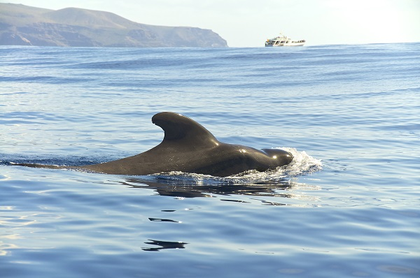 Whale Watching Canary Islands