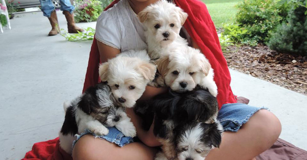 Picture Taking Days | Contented Puppies Paradise