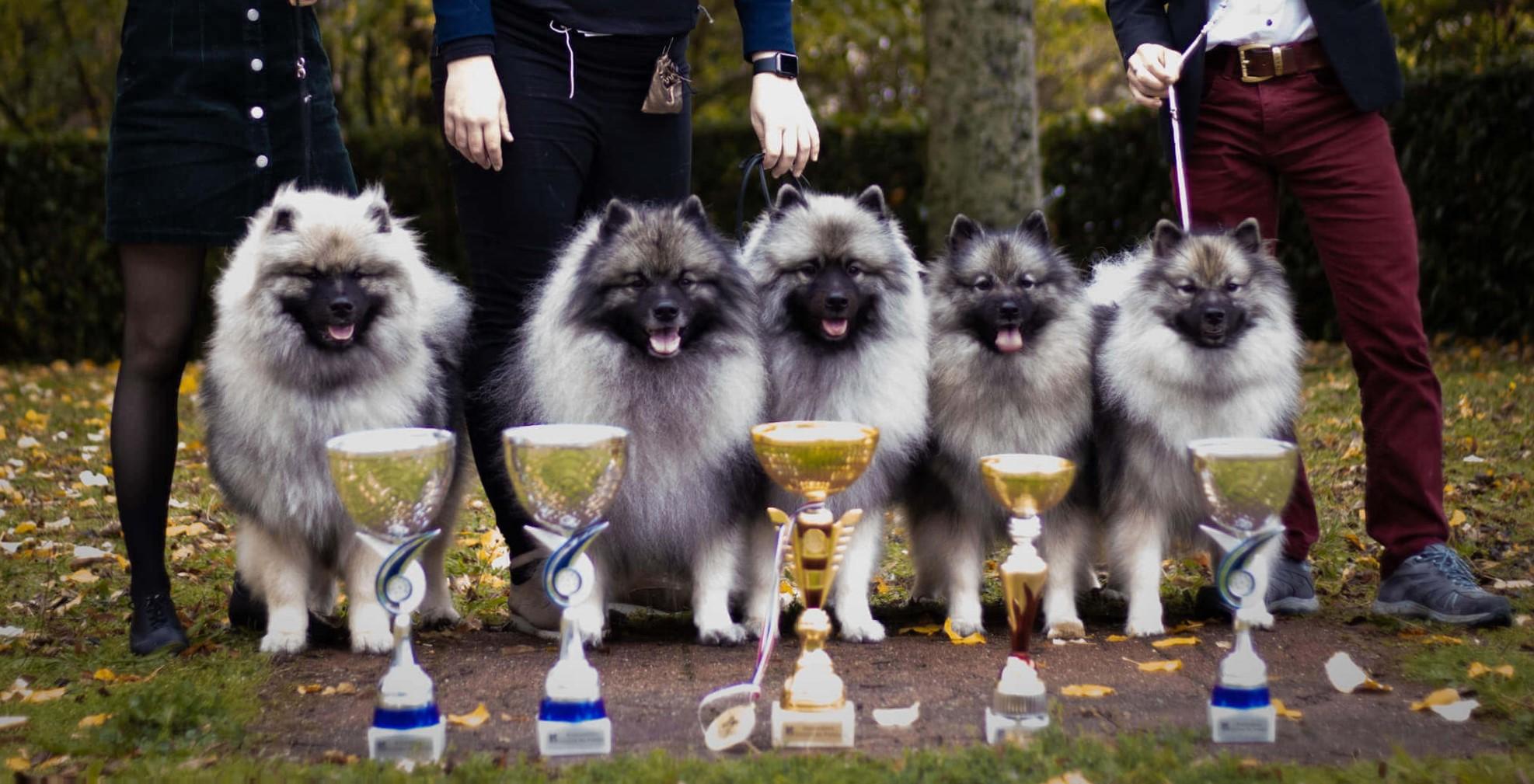 coupe podium chiens
