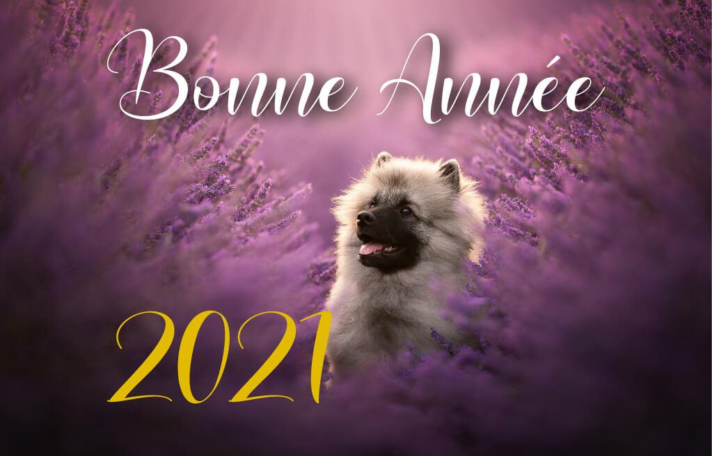 elevage spitz loup lavande nouvel an