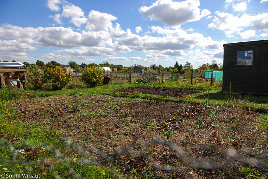 View of allotment in Olney