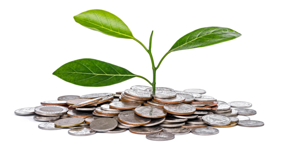 plant seedling implausibly growing out of pile of coins