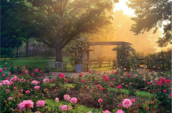 Columbus Park of Roses garden