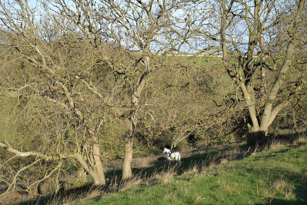 Beaufort Hunt  - Shirehill