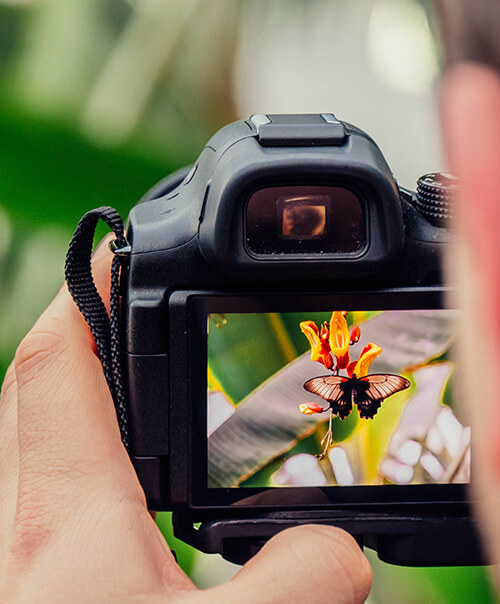 Expert Photography Workshops