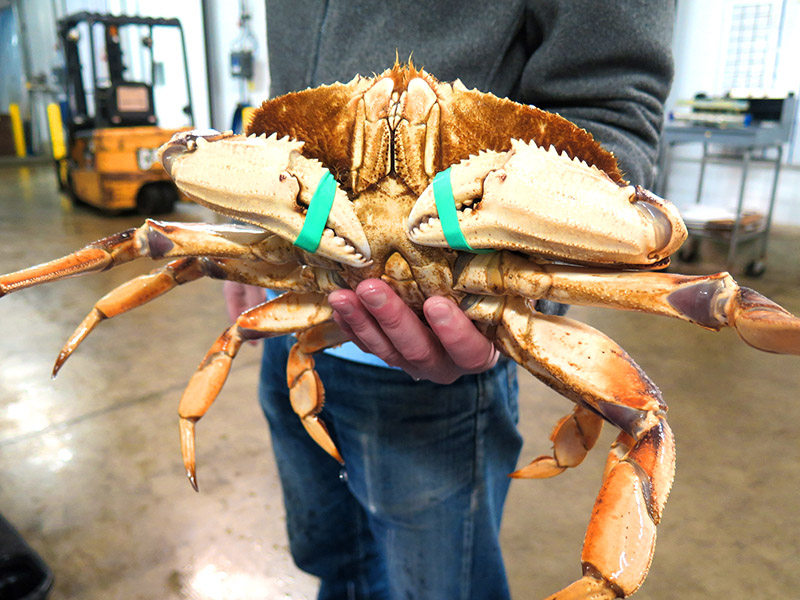 Photo of a man holding big crab with his hand