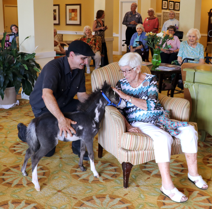 Miniature therapy horses help patients impacted by illness and/or disability.
