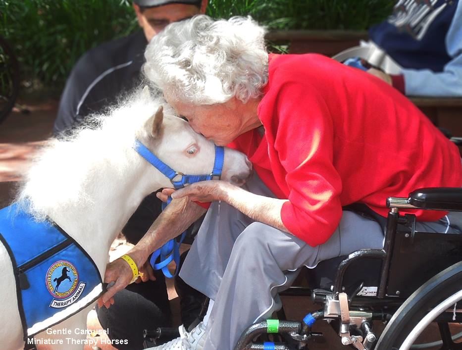 Miniature Therapy Horses Are Just What the Doctor Ordered