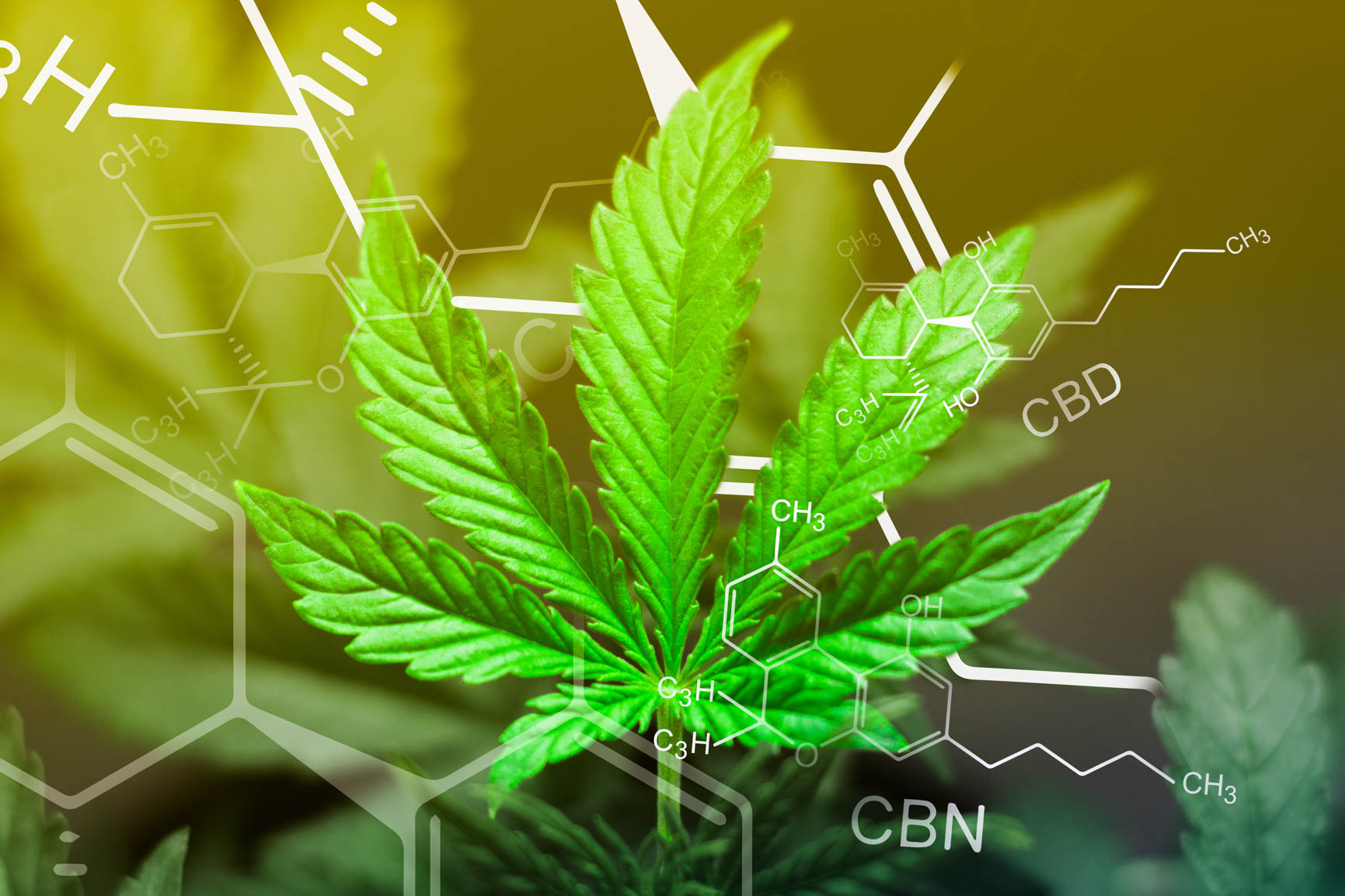 Photo of a hemp leaf with CBD molecular structure