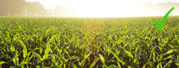 Boosts to Agricultural Productivity