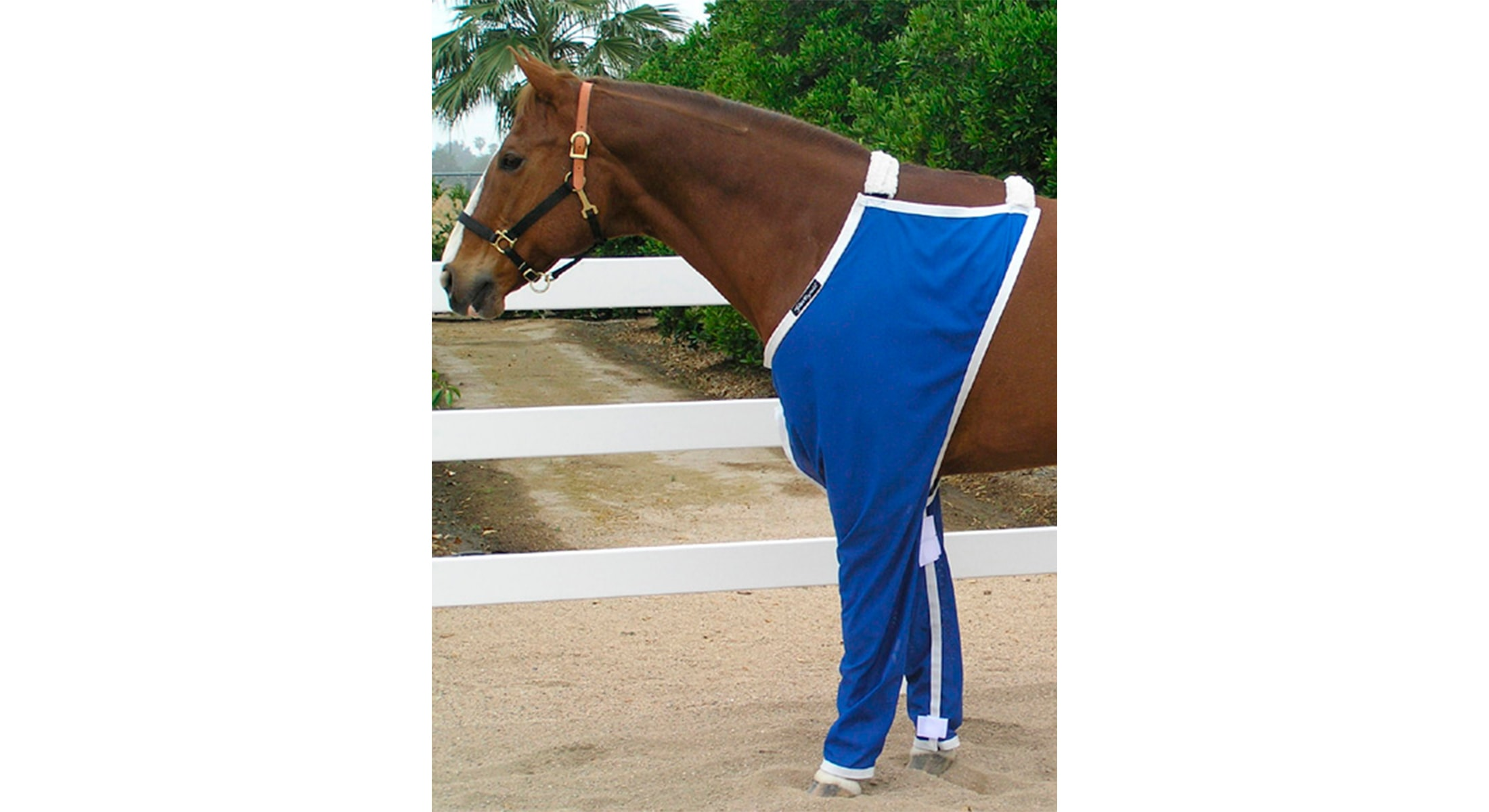 Why thinking about horse trousers is good for you