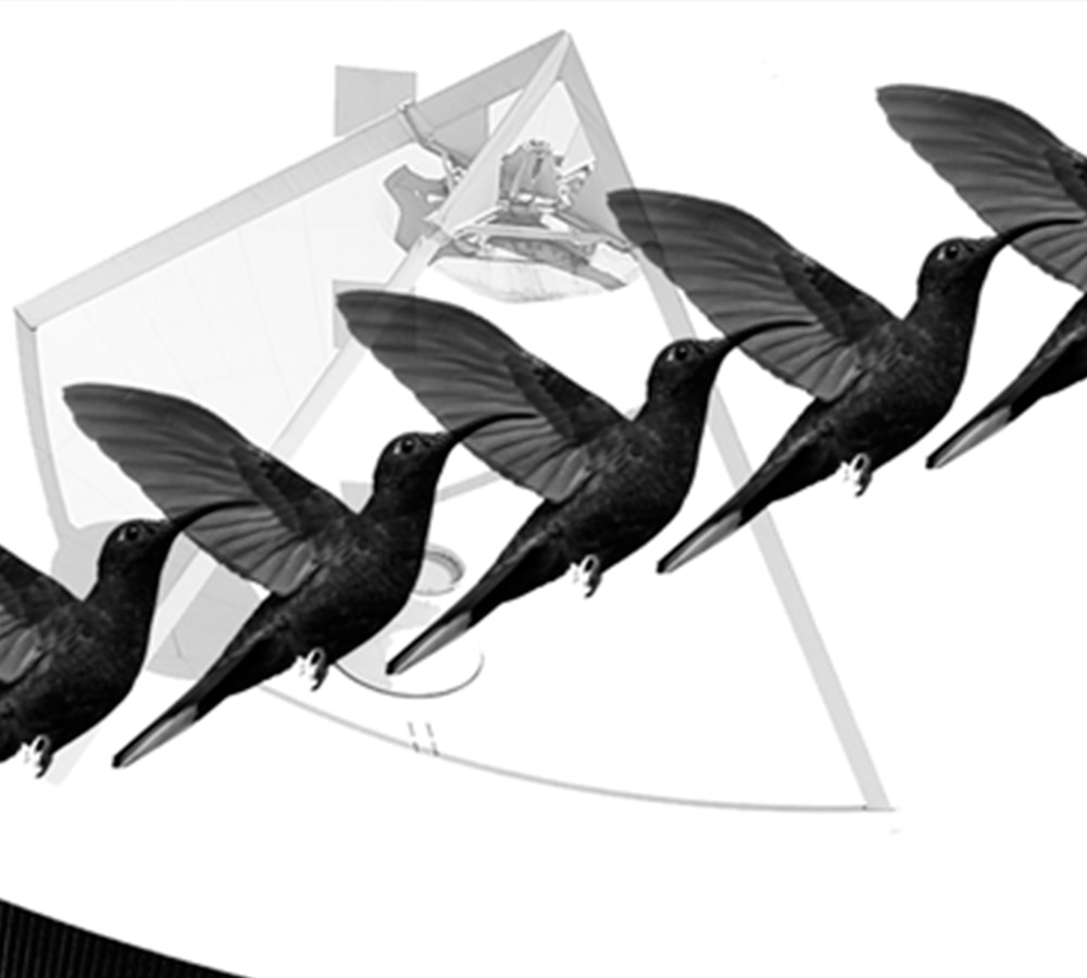Citizen science, big data and birds